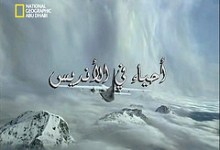 أحياء في الأنديس ناشونال جيوغرافيك ابو ظبي