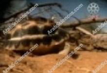 صورة السلاحف والزواحف