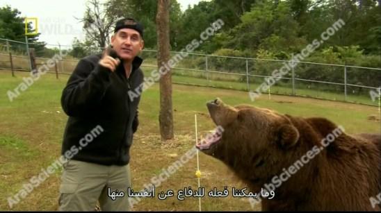 برايدي بار و الدب