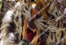 أفتك حيوانات العالم : الهند