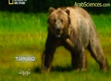 مفترسات الكوكب : الدب الملك