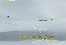 صورة وادي الذئاب