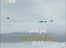 وادي الذئاب