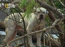 إنقاذ حيوانات كاترينا