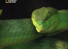 أفتك حيوانات العالم : آسيا