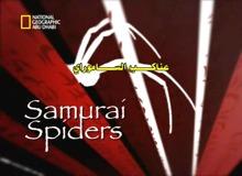 عناكب الساموراي