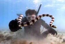صورة مقال – أسرار الأفاعي – بقلم المستكشف زولتان تاكاكس