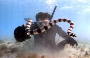 sea_snake_scuba_reef