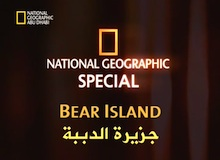 جزيرة الدببة
