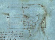 أطراف الجسم : الرأس