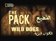 القطيع : الكلاب البرية