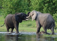 بالجرم المشهود - ساحة معركة الفيلة