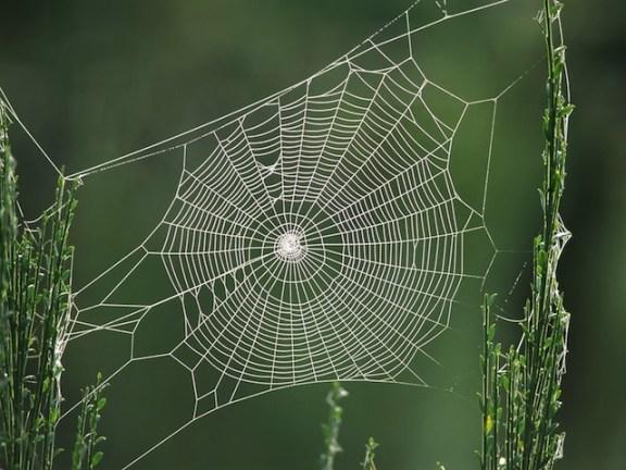 شبكة العنكبوت و قدرتها الخارقة