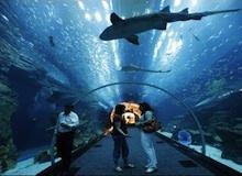 ملوك أحواض السمك : الزعانف