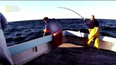 سمكة التونة العنيدة : نهاية اللعبة