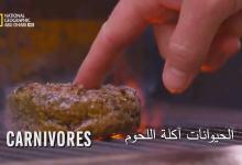 صورة قصة الغذاء HD : الحيوانات اكلة اللحوم