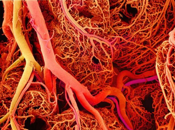 الأوعية الدموية