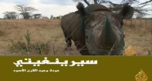 سيرينغيتي .. عودة وحيد القرن الأسود