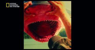 أسماك مخيفة HD : القرش النهري