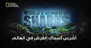 خاص القروش : أشرس أسماك القرش في العالم