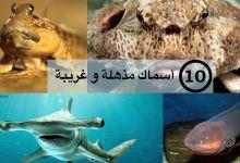 صورة مقال – 10 أسماك مذهلة و غريبة