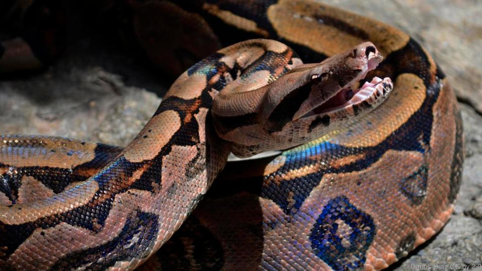 لدينا أسباب وجيهة لكي نخاف من بعض الثعابين القاتلة