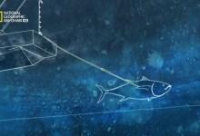 صورة سمكة التونة العنيدة HD : معركة ملكية الموسم 3 – حلقة 8