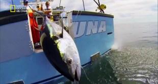 سمكة التونة العنيدة HD : خط العرض الباطل