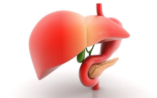 التخلص من السموم عن طريق الكبد