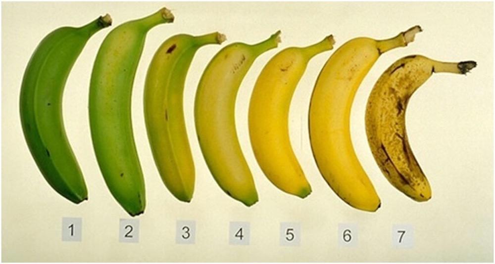 مقال - الموز الناضج أم الموز غير الناضج .. أيهما الأفضل؟ - موقع علوم العرب