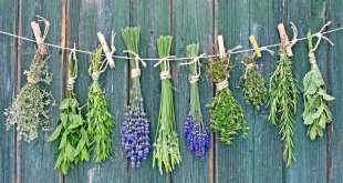 مقال - أعشاب طبيعية ورغم مرارتها.. تعالج أمراضا كثيرة