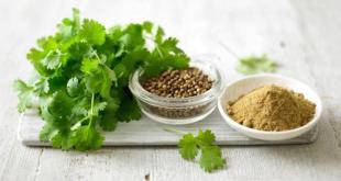 مقال - الكزبرة نكهة مميزة للطعام وفوائد صحية جمة