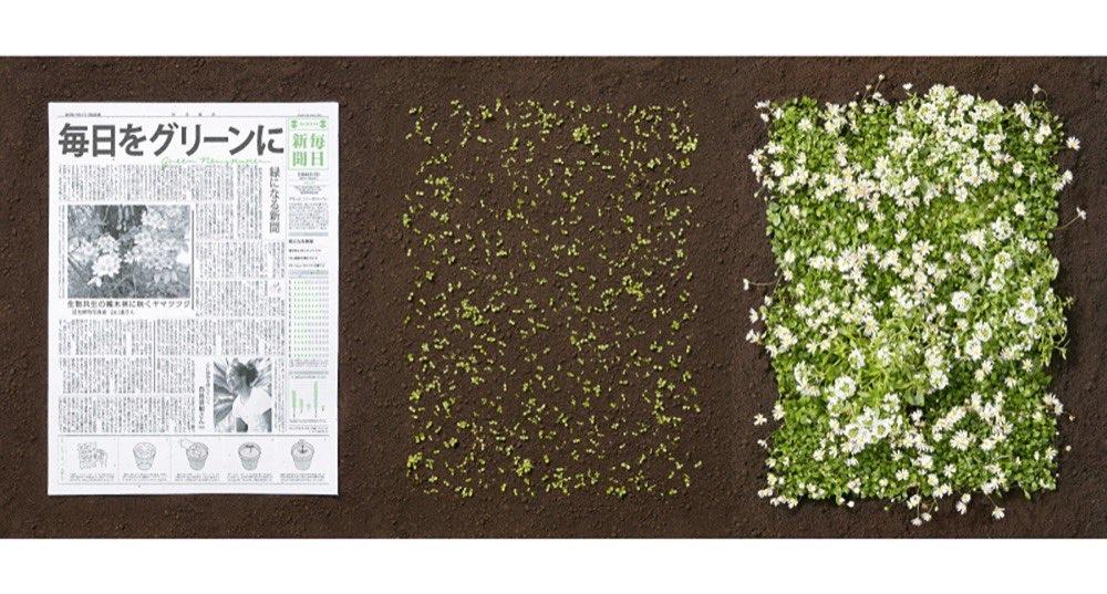 مقتطف - من اليابان : جريدة بعد أن تقرأها تتحول إلى نباتات وزهور - موقع علوم العرب