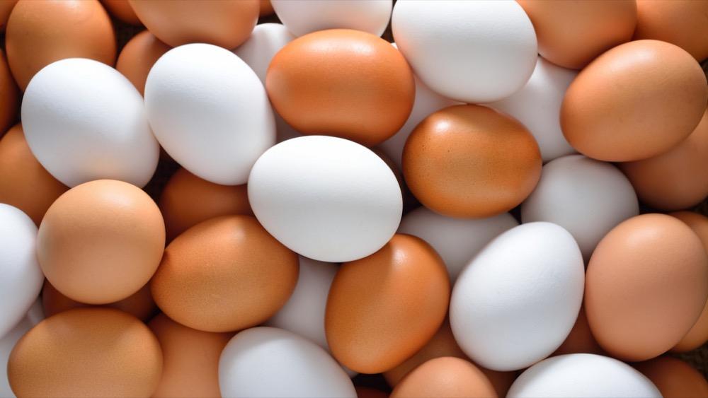 مقال - ما الفرق بين البيض الأبيض و البيض البني؟