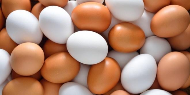 مقال - ما الفرق بين البيض الأبيض والبيض البني؟