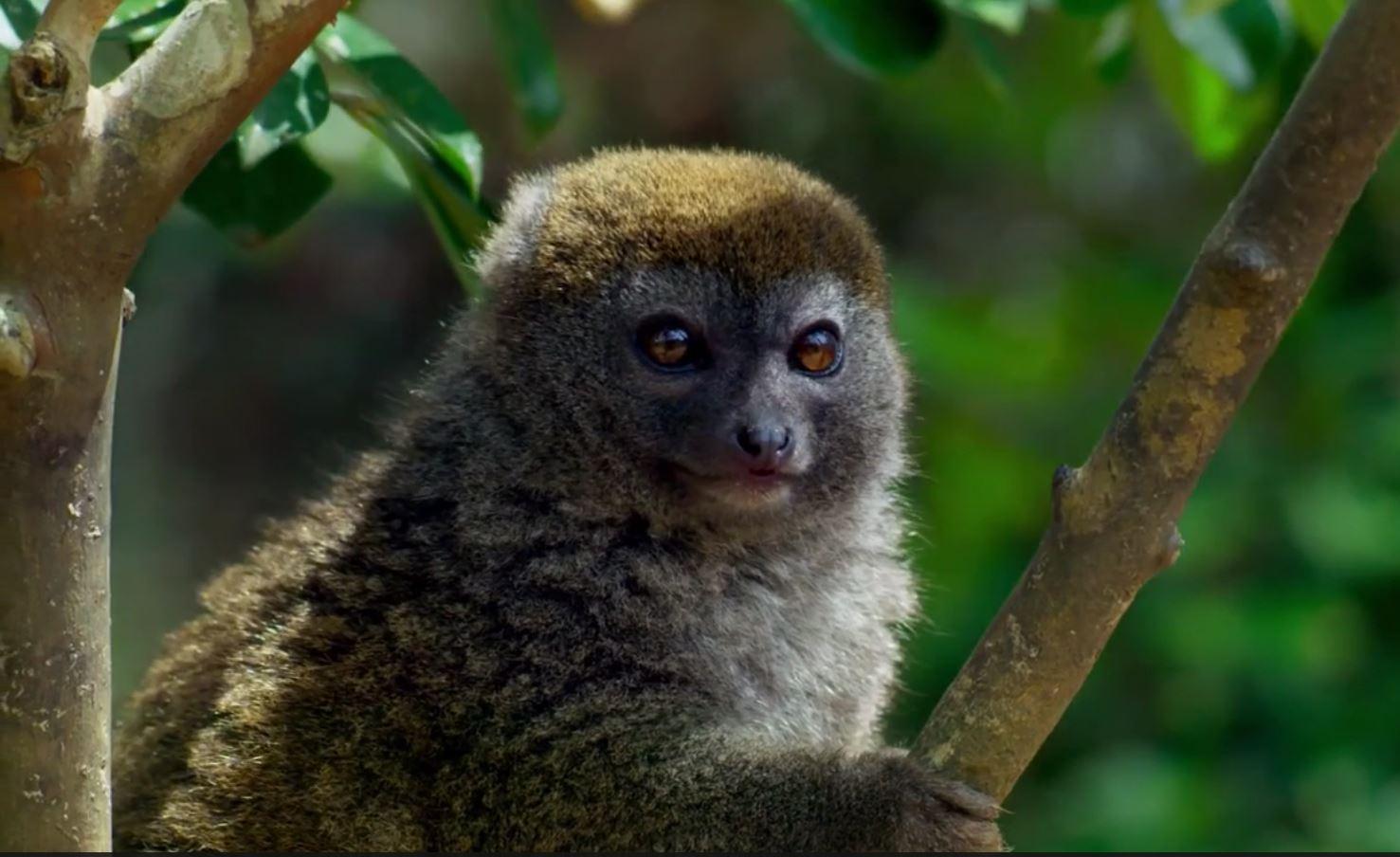 مترجم – كوكب الأرض الموسم الثاني : ح3 الغابات - موقع علوم العرب
