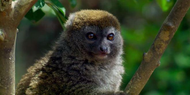 مترجم – كوكب الأرض الجزء الثاني : ح3 الغابات