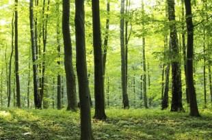 مترجم – كوكب الأرض الجزء الأوّل : ح8 الغابات
