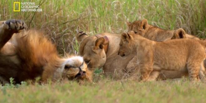 إعادة الحياة لمملكة إفريقيا البرية HD – ح6 و الأخيرة