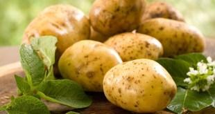 مقال - ما لا تعرفه عن فوائد البطاطس!