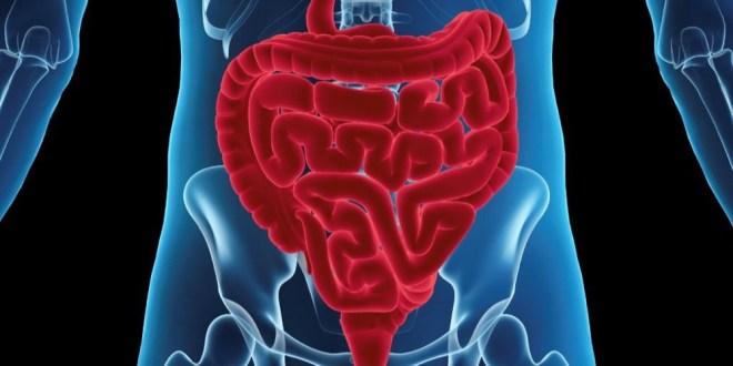 مقال - 5 نصائح مهمة لتحسين عملية الهضم