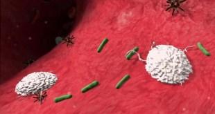 مقال - كيف نقوي مناعتنا ضد الأمراض؟