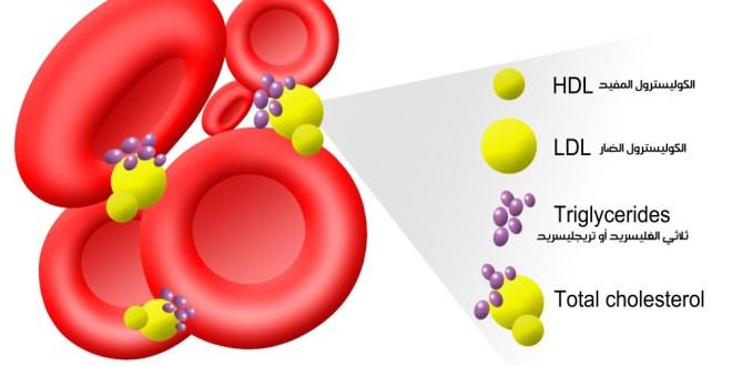 مقال - 9 حقائق يجب أن تعرفها عن الكوليسترول