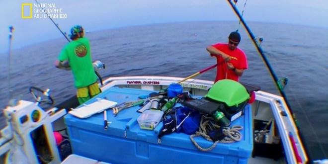 سمكة التونة العنيدة HD : الموسم 5 – ح8 : صراع أعضاء الفريق