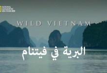 صورة وجهات برية : البرية في فيتنام