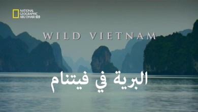 وجهات برية : البرية في فيتنام