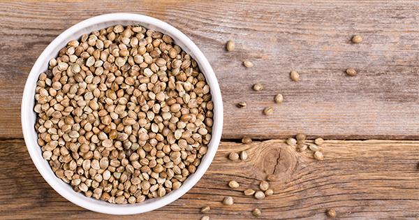 بذور القنب - Hemp Seed