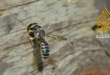 صورة سفراء الحياة (حياة النحل)