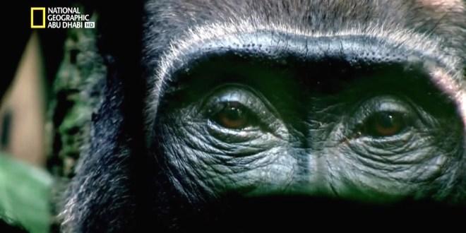 مملكة القرود ح2 : صراع الملوك
