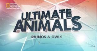 عالم الحيوانات المذهل - وحيد القرن و البوم